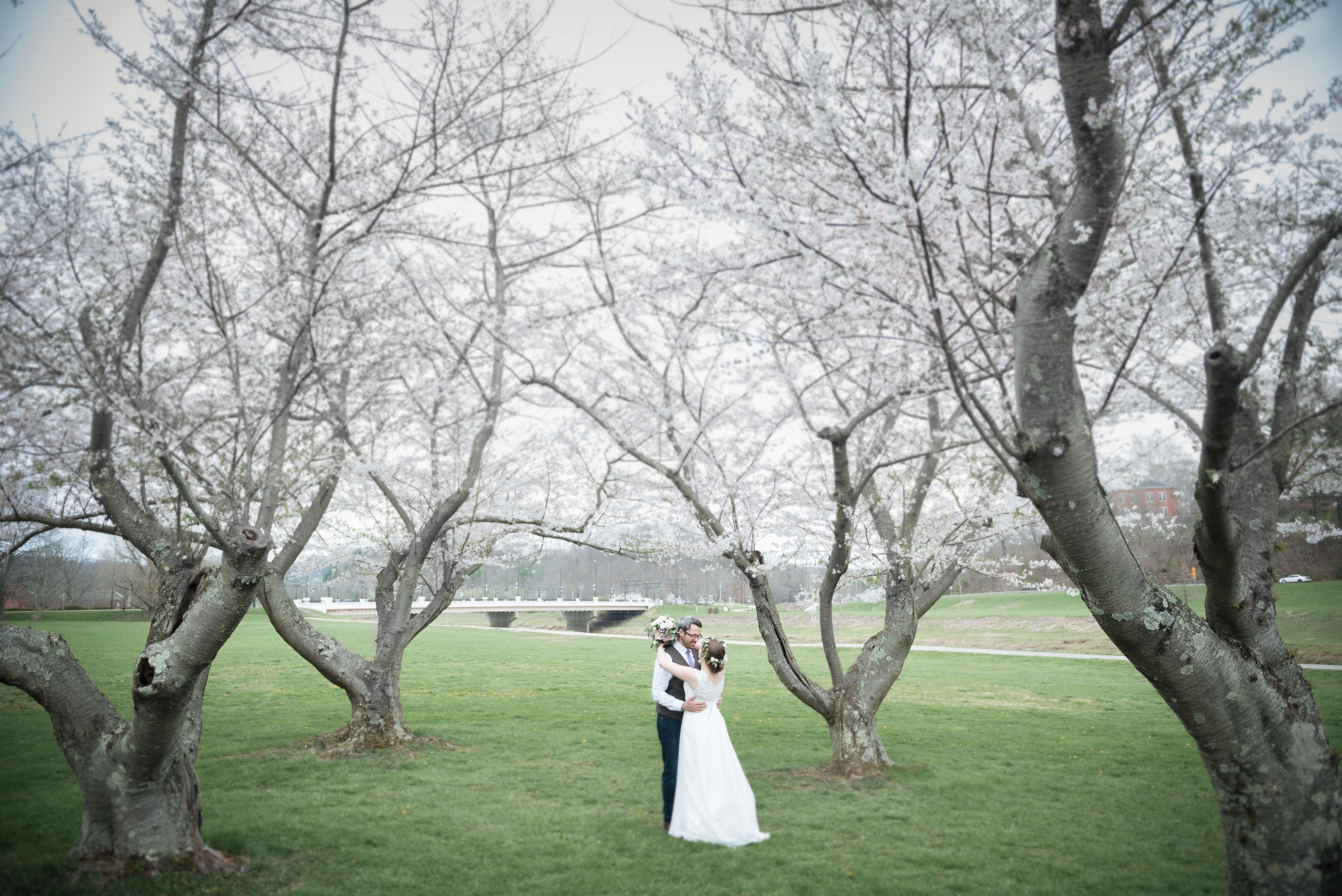 bride and groom stand under cherry blossom trees in athens ohio