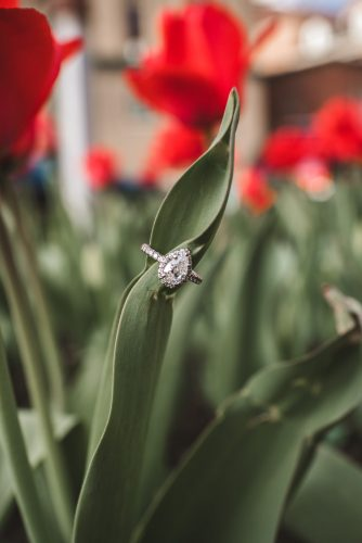 Engagement ring in spring with red tulips